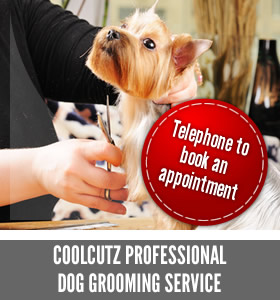 Professional Dog Grooming Service